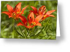 Western Wood Lily Greeting Card