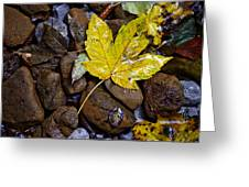 Wet Autumn Leaf On Stones Greeting Card