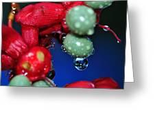 Wet Berries Greeting Card by Kaye Menner