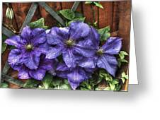 Wet Clematis Greeting Card