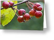 Wet Crab Apples Greeting Card