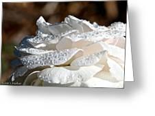 Wet Diamonds Greeting Card