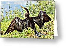Wet Feathers Greeting Card