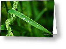 Wet Grasses Greeting Card