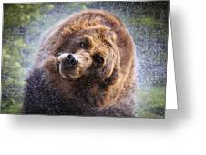 Wet Griz Greeting Card by Steve McKinzie