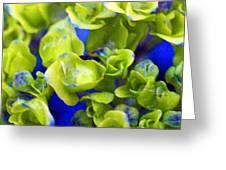 Wet Hydrangea Greeting Card