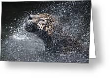 Wet Jaguar  Greeting Card