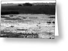 Wet Landscape Greeting Card