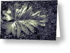 Wet Leaf Greeting Card