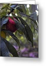Wet Peach Greeting Card