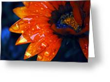 Wet Petals Greeting Card
