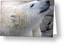 Wet Polar Bear Close-up Portrait Greeting Card