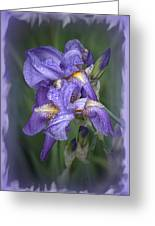 Wet Purple Greeting Card