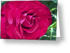 Wet Rose Greeting Card by Kenneth Feliciano