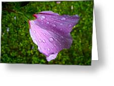 Wet Rose Of Sharon 2 Greeting Card