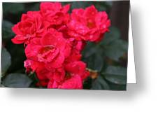 Wet Roses Greeting Card