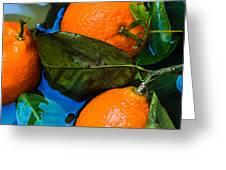 Wet Tangerines Greeting Card by Alexander Senin