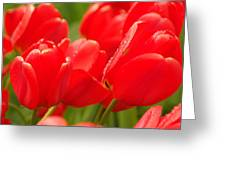 Wet Tulips Greeting Card