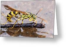 Wet Wasp Greeting Card