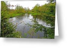 Wetland Greens Greeting Card