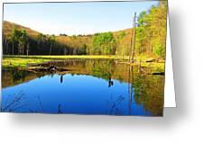 Wetland Morning Calm Greeting Card