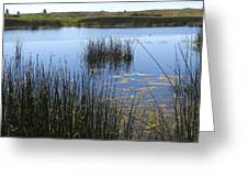Wetland Pond In Summer  Greeting Card
