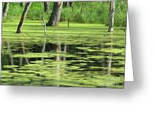 Wetland Reflection Greeting Card