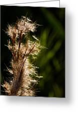 Wetland Sparkles Greeting Card