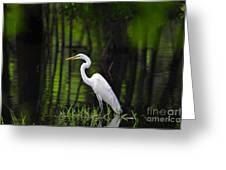 Wetland Wader Greeting Card