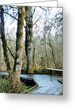 Wetlands In March Greeting Card