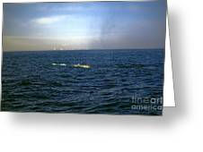 Whale Show Greeting Card