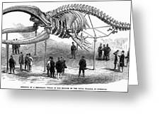 Whale Skeleton, 1866 Greeting Card