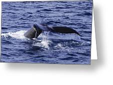 Whale Tail 2 Greeting Card