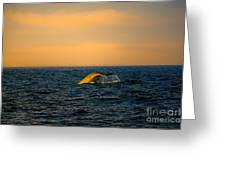 Whale Tail In The Sun Greeting Card