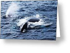 Whales Family Greeting Card