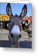 What . . . No Carrots Greeting Card by Mike McGlothlen