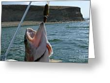 What A Mouth Greeting Card by Jeff Pickett
