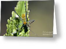 What Am I? Greeting Card