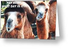 Camel What Day Is It? Greeting Card