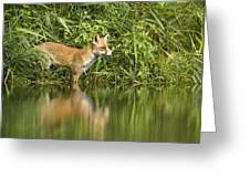 What Does The Fox See Greeting Card