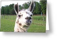 Rare Polka Dot Llama Pogo Greeting Card