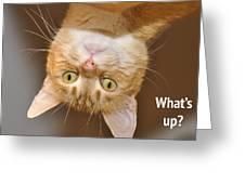 What's Up 2 Greeting Card