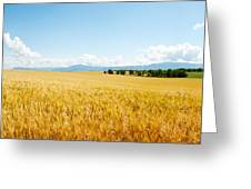 Wheat Field Near D8, Brunet, Plateau De Greeting Card