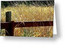 Wheat N' Fence Greeting Card