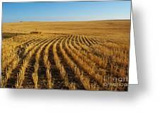 Wheat Rows Greeting Card