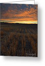 Wheat Stubble Sunset Greeting Card