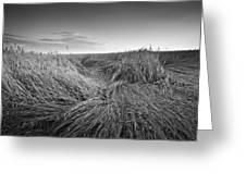 Wheat Waves Greeting Card