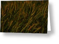Wheat Waving In The Wind Greeting Card
