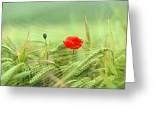 Wheatfield Poppy Greeting Card