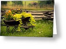 Wheel Barrow Of Flowers Greeting Card
